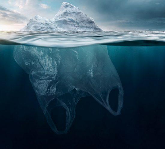 biodegradabile compost riciclabile